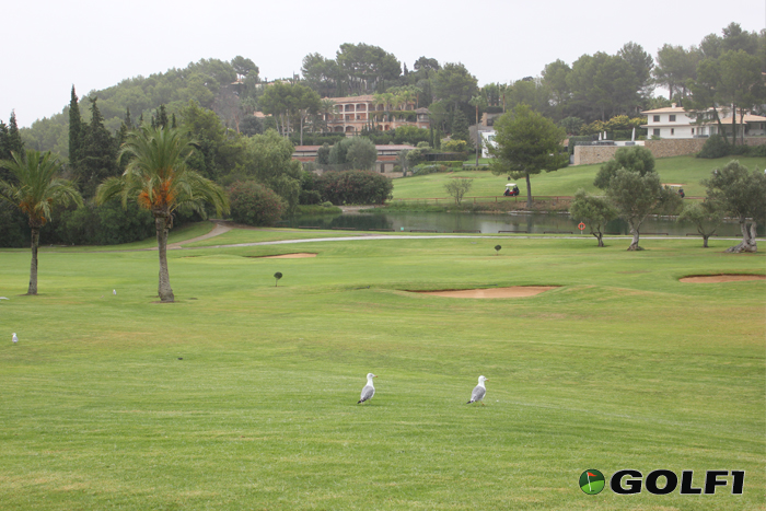 golfaufmallorca04