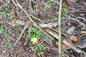 Gut sichtbar sogar im Unterholz © jfx