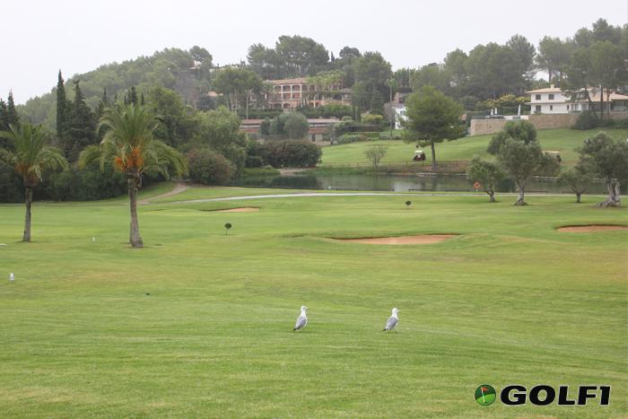 Golfplatz Son Vida