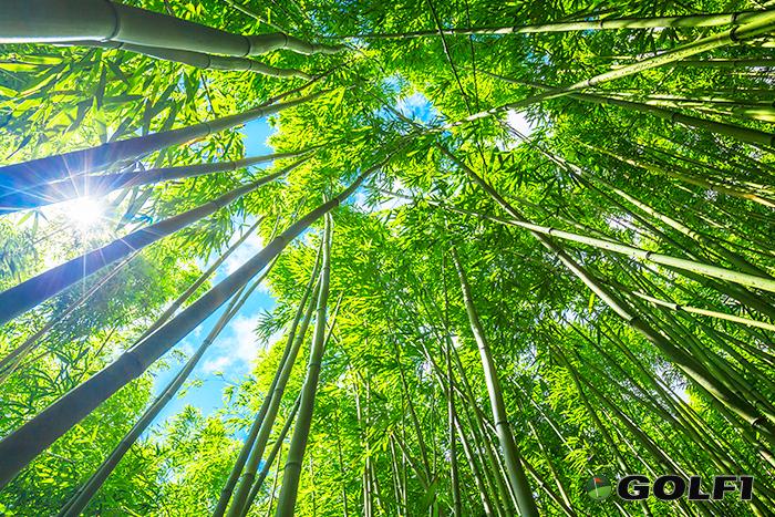 Bambus ist ein schnell nachwachsender, flexibler und bruchfester Rohstoff © epic stock media / depositphotos