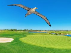 Golf Albatros